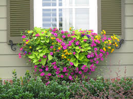 Wooden Window Flower Boxes - easy window flower boxes ideas all about house design