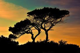 trees images pixabay free pictures