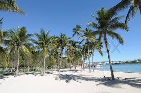 palm trees in downtown miami florida usa stock photo colourbox