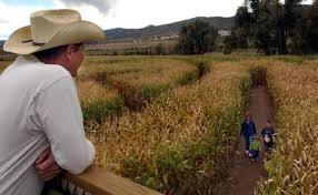 Denver Botanic Gardens Corn Maze Botanic Gardens At Chatfield Opens Corn Maze The Denver Post