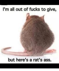 Rats Ass Meme - i m all out of fucks to give but here s a rat s ass ass meme on
