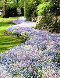 736 best perennials images on pinterest flower gardening