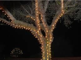 56 best outdoor tree lighting images on pinterest outdoor tree