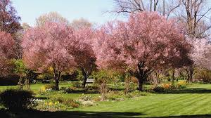 Botanical Gardens In Nj Experience The Fragrance Of 200 Varieties Of Lilacs At New