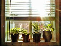 Window Sill Herb Garden by Backyard Windowsill Salad Garden Mini Gardeners Window Sill