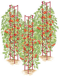 growing tomatoes cages trellises fertilizers for tomato growing