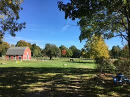 backyard horse barns horse barn gambrel backyard my home tour pinterest