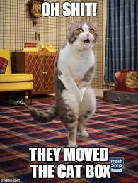 Oh Shit Meme - oh shit cat meme cat planet cat planet
