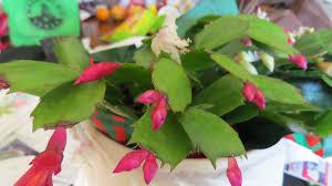 cactus dallas garden buzz