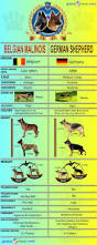 belgian sheepdog national specialty 2014 best 20 the germans ideas on pinterest u2014no signup required