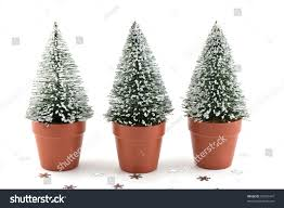 tiny artificial snowflecked evergreen christmas trees stock photo