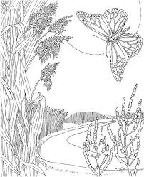 280 coloring pages print butterflies images