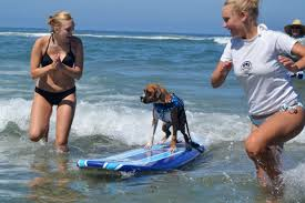 san diego surf thanksgiving surf lessons surf dog surfing lessons helen woodward animal center