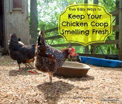 Chicken Running Meme - keep your chicken coop smelling fresh timber creek farm