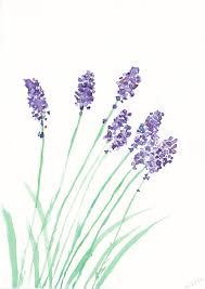 Flowers Designs For Drawing Acuarela Lavanda U2026 Pinteres U2026