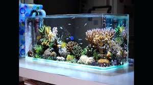 aquarium decoration ideas freshwater cool aquarium ideas home accessories fish aquarium designs fish tank