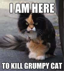 Grump Cat Meme - funny cat meme i am here to kill grumpy cat image