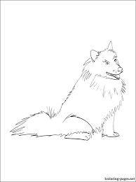 american eskimo dog vector american eskimo cliparts free download clip art free clip art