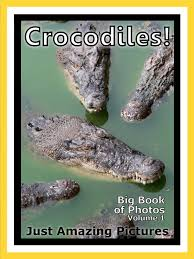 Interior Crocodile Alligator Interior Crocodile Alligator Song Instainterior Us
