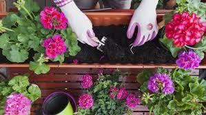balkon grã npflanzen balkonpflanzen tipps und infos zur balkonbepflanzung