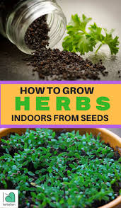 Grow Herbs Indoors by 1000 Images About Garden On Pinterest Beehive Aquaponics And