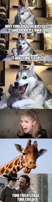 Dog Jokes Meme - the saga begins mmmwhahahaha lol pinterest saga memes