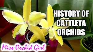 Orchids Facts by History Of Cattleya Orchids Youtube
