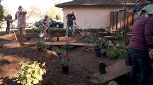 calif native plants installing a california native plant garden youtube