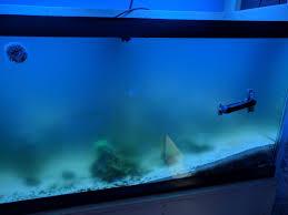 Home Aquarium Phyto Bloom In A Home Aquarium Reef2reef Saltwater And Reef