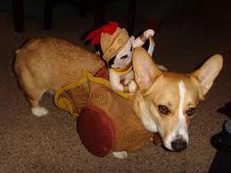 target halloween dog costumes bender u0027s adventure dog blog october 2010