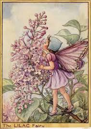 the lilac fairy flower fairies