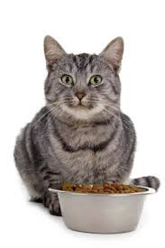 science diet cat food reviews lovetoknow