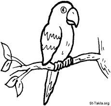 charming color book colouring pages 15 parrot coloring book
