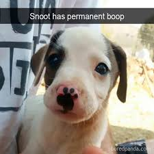 Hyper Dog Meme - simple 27 best funny and so true dog memes images on pinterest