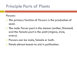 Part Of Flowers - plant science careers 3 01 major plant science industries 1