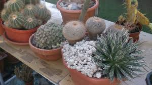 my cacti u0026 succulent plants end of september update 2016 youtube