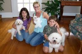 bichon frise nashville southern paws bichons u2013 bichon frise puppies for sale