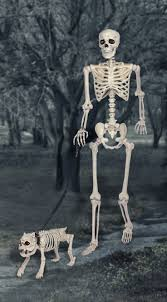 Halloween Posable Skeleton 100 Best Skeletons Images On Pinterest Halloween Stuff