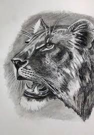 lioness study drawing by ramesh mahalingam