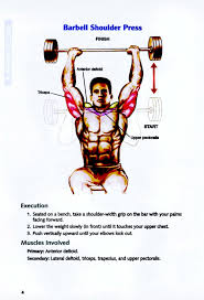 What Muscle Do Bench Press Work Bodybuilding Anatomy