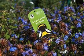 Wildlife Garden Ideas Ideas On Attracting Wildlife To Your Garden Expert Advice From