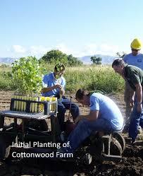 native plants of colorado native plant materials development tamarisk coalition