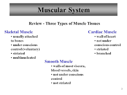 Anatomy And Physiology The Muscular System Anatomy And Physiology Muscles And Muscle Tissue Ppt Video