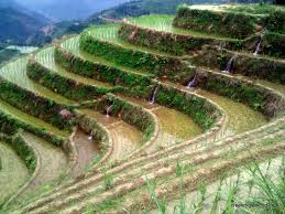 Beautiful Places On Earth by Watching Rice Grow At The Most Beautiful Place On Earth Asia