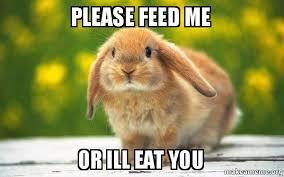 Feed Me Meme - please feed me or ill eat you regretful rabbit make a meme
