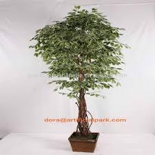 taiwan ficus bonsai taiwan ficus bonsai suppliers and