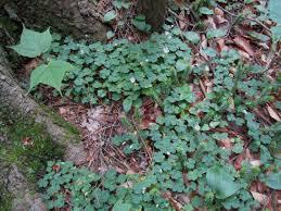 native plants of montana plants north carolina native plant society