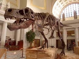 Dinosaur Head Wall Mount The Secrets Of Sue Travel Channel