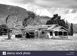 old farm house with dead tree in new zealand near of the golden