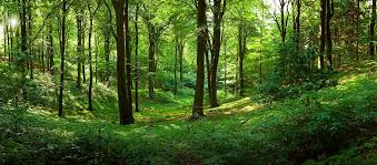 forest images The meaning and symbolism of the word forest jpg